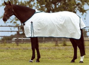 Cover photo for Choosing the Best Blanket for Your Horse