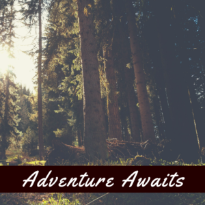 Adventure Awaits in the forest