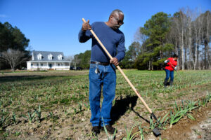Minority farmer raking in garlic field