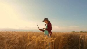 Girl in wheat field holding a laptop
